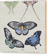 Butterflies I Wood Print