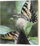 Butterflies Lunch Date Wood Print