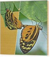 Butterflies Mating Out Of Bounds Wood Print