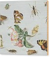 Butterflies Moths And Other Insects With A Sprig Of Apple Blossom Wood Print