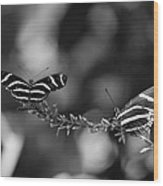 Butterflies On A Wire Wood Print