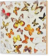 Butterflies Square Wood Print