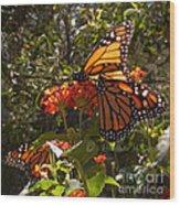 Butterflies Three Wood Print