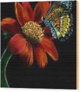 Butterfliy Wood Print