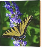 Butterflly Bush And The Swallowtail Wood Print