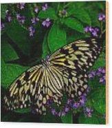 Butterfly - Yellow Green Purple Wood Print