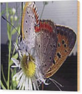 Butterfly 002 Wood Print