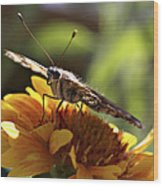 Butterfly 004 Wood Print