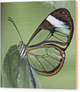 Butterfly 005 Wood Print