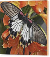 Butterfly 006 Wood Print