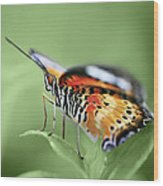 Butterfly 008 Wood Print