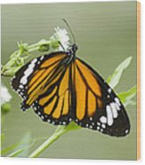 Butterfly 009 Wood Print