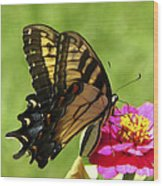 Butterfly 011 Wood Print