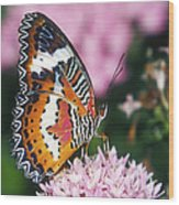 Butterfly 012 Wood Print