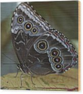 Butterfly 015 Wood Print