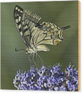 Butterfly 020 Wood Print