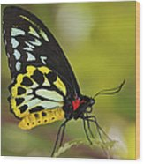 Butterfly 022 Wood Print