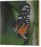 Butterfly 025 Wood Print