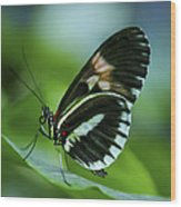 Butterfly 026 Wood Print