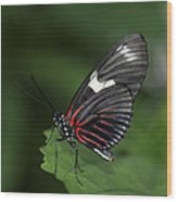 Butterfly 027 Wood Print