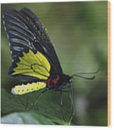 Butterfly 029 Wood Print
