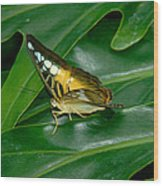 Butterfly 1 Wood Print