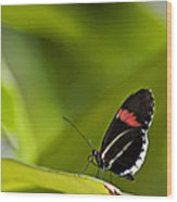 Butterfly 14 Wood Print