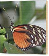 Key West Butterfly 2 Wood Print
