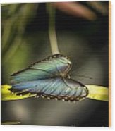 Butterfly 21 Wood Print