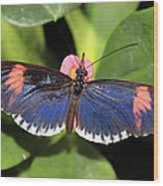 Key West Butterfly 3 Wood Print