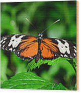 Butterfly 5 Wood Print