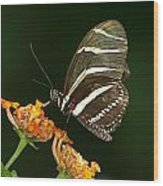 Butterfly 50 Wood Print