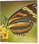 Butterfly 8 Wood Print