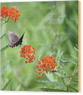 Butterfly A L'orange Wood Print