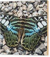 Butterfly Amongst Stones Wood Print