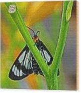Butterfly An3597-13 Wood Print