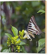 Butterfly And A White Flower Wood Print