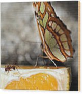 Butterfly And Ant Wood Print