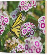 Butterfly And Blooms - Spring Flowers And Tiger Swallowtail Butterfly. Wood Print