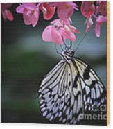 Butterfly And Blossoms Wood Print