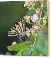 Butterfly And Flower. Wood Print