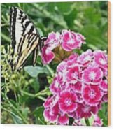 Butterfly And Sweet Williams Wood Print