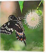 Butterfllies And The Crystal Balls Wood Print