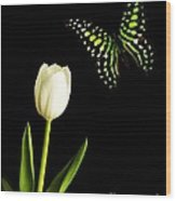 Butterfly And Tulip Wood Print
