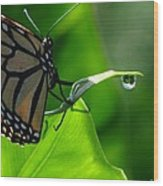 Butterfly And Water Wood Print