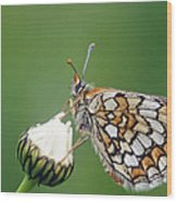 Butterfly And White Flower Wood Print