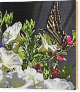 Swallowtail Butterfly On White Petunia Flower Wood Print