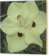 Butterfly Anthers Wood Print