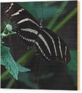 Butterfly Art 2 Wood Print