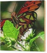 Butterfly Art Wood Print